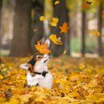 Cuidado perros otoño